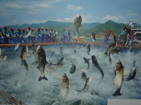 Риболов с огромна мража на Езерото с хиляда островчета. Фотография Xinhua