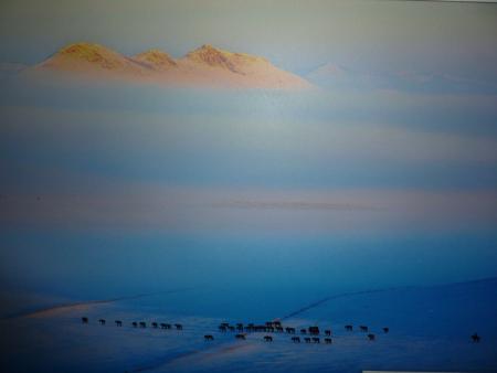 Пасбища във Вътрешна Монголия. Фотография Zhong Shuwen