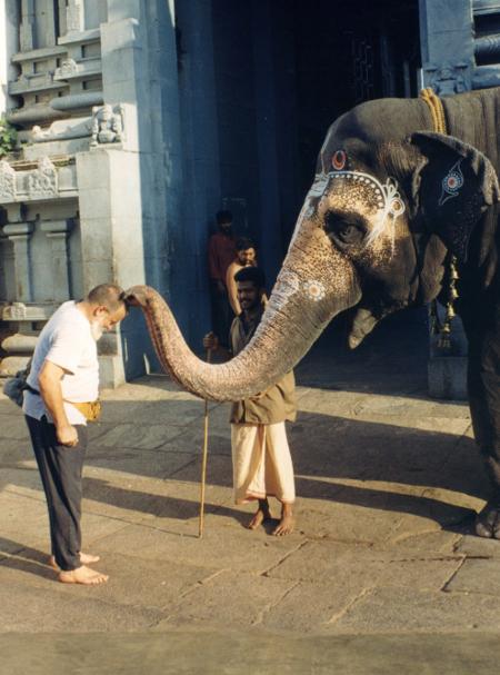 Благословия от слон за щастие при входа на храм в Южна Индия.
